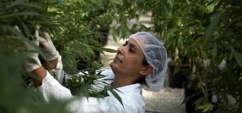 Le New Hampshire est le 19ème Etat Américain à légaliser le cannabis médical
