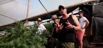 Le Roi du Cannabis: Reportage sur Arjan Roskam, le fondateur de la célèbre marque Green House