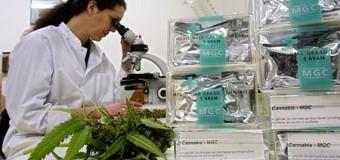 Une étude japonaise démontre que les cannabinoïdes inhibent la croissance tumorale