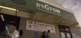 Documentaire sur l'essor du marché du cannabis médical aux Etats-Unis