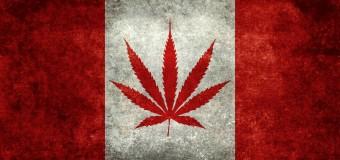 Canada: 5 impacts de l'annonce de la légalisation du cannabis sur son marché