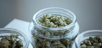 L'expérimentation du cannabis thérapeutique en France va démarrer dans les prochaines semaines