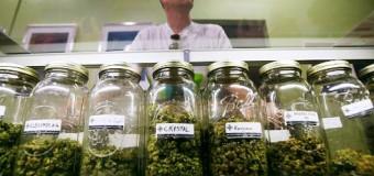 Documentaire: Et si le cannabis guérissait le cancer?